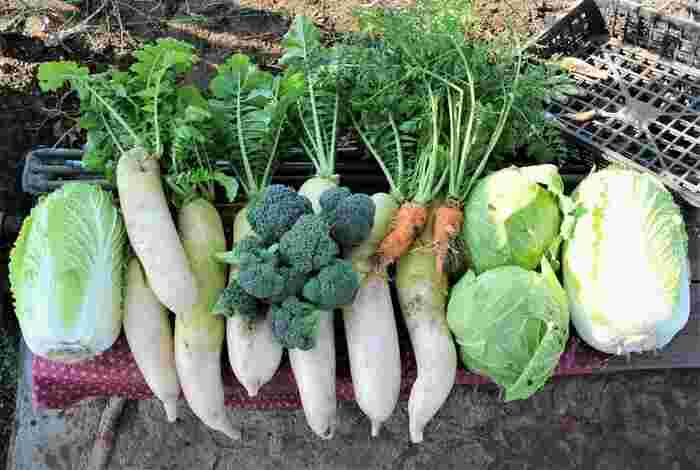 冬野菜を長く食べきる!【漬け物・冷凍・大量消費】賢い保存法&調理法