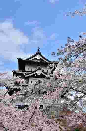 現在は、大がかりな弘前城の石垣修理中のため、残念ながらこの姿はしばらく楽しめません。