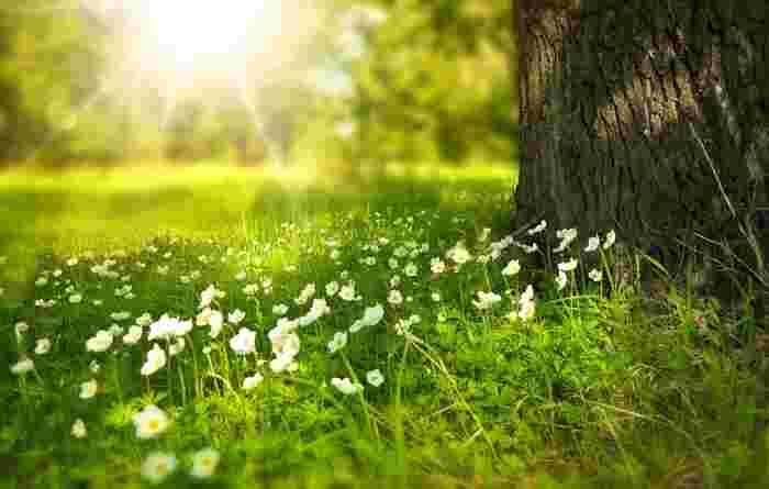 太陽と仲良く過ごすために。内からも外からも【Wで紫外線対策】はじめてみませんか