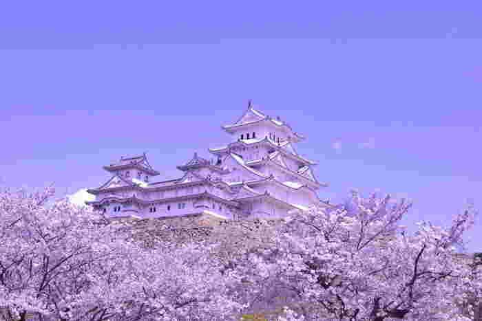 抜けるような青空、傑出した美しさを持つ白亜の天守閣、春爛漫の中で咲き誇る桜が織りなす景色は、絶景そのものです。
