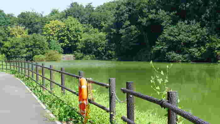 レンタルサイクルで園内を周遊するのもおすすめ。自然の丘陵を活かした地形なので、アップダウンがあり運動不足が解消されそうです。汗をかいたら、池のほとりで休憩しながらキレイな空気を吸い込んでリフレッシュしましょう。