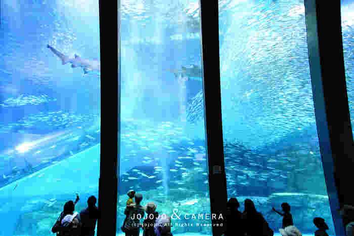 水族館のメインとなる「アクアミュージアム」には、高さ8mにも及ぶ巨大な大水槽があります。中でも来園者の目を引くのは、7万尾ものイワシの群れ。ライティングや音楽とコラボしたショー「スーパーイワシイルージョン」も行われています。