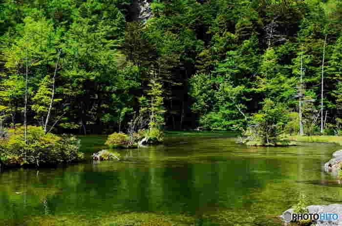 翡翠色の水面をした明神池は、穂高神社境内にあるの神域です。池の周囲をぐるりと取り囲む針葉樹林の樹々と、静かな水面は、どこか神秘的な雰囲気を醸し出しており、この場所が神々の住処であるかのような気分を覚えるほどです。