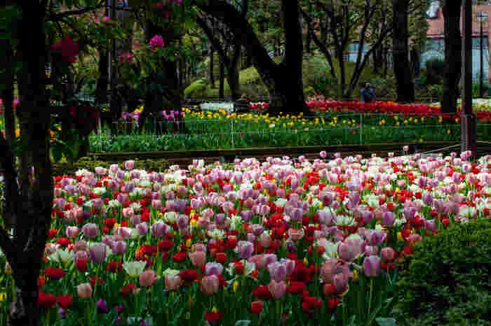 1876年に開園された横浜公園は、横浜市有数の西洋式公園で、約64000平方メートルの敷地面積を誇ります。