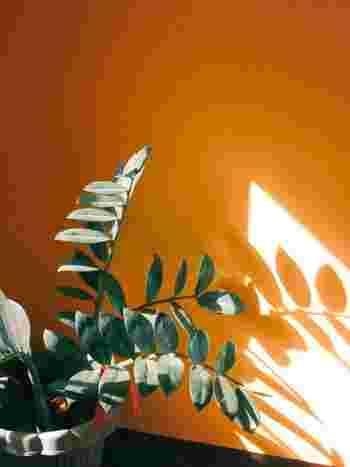 観葉植物の葉っぱの形や向きなどが、風水には大きく影響します。風水の「気」を決めるのが、これらのポイントなのだそう。リラックス効果が欲しいときには「丸く下向きの葉っぱ」、アクティブに行動したいときには「細く尖った上向きの葉っぱ」の観葉植物を選ぶと良いですよ。