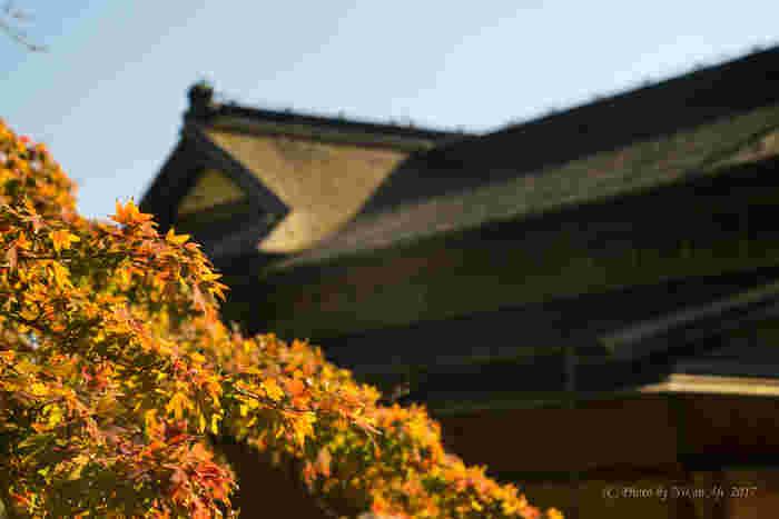 「お伝い橋」と呼ばれる橋をわたった先にはお茶屋さんがあり、抹茶をいただくことができます。紅葉を見たあとにお茶屋さんでひと息、なんてコースで、風流な和の世界にトリップする1日はいかがでしょうか。