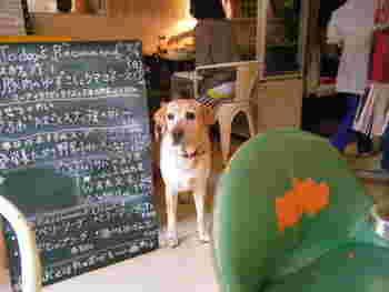 看板犬のアイビーちゃん。訪れた人や犬にあいさつをしてくれます。