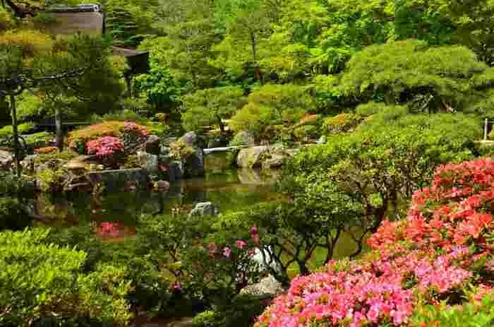 東求堂の前は、美しい庭園となっています。静かな水面と、深い緑の樹々、季節の花々が織りなす景色は、まさに極楽浄土を彷彿とさせる趣を醸し出しています。