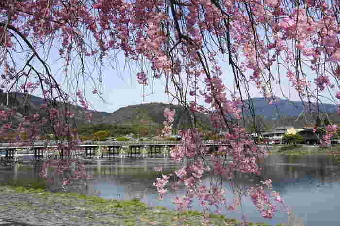 景勝地の宝庫として知られている名勝・嵐山では、春は桜、夏は深緑、秋は紅葉と四季折々で美しい景色を見せてくれます。