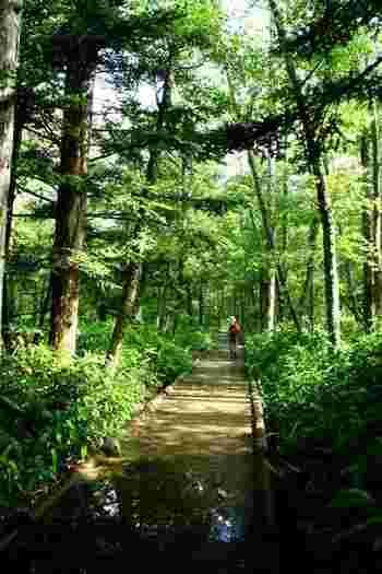 歩道はきれいに整備されているので、自分で歩ける年齢の子どもなら散策も楽しいでしょう。道中は、湿原や池、小川など様々な眺めと触れ合えるので飽きません。