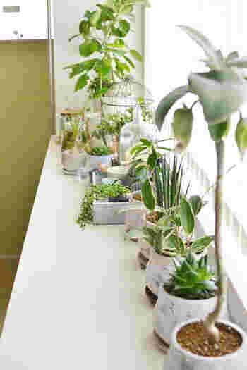 観葉植物は実にたくさんの種類があります。初心者さんは、お世話があまり難しくない丈夫な品種の植物がおすすめです。人気の育てやすい品種とそれぞれの育て方ポイントを紹介します。