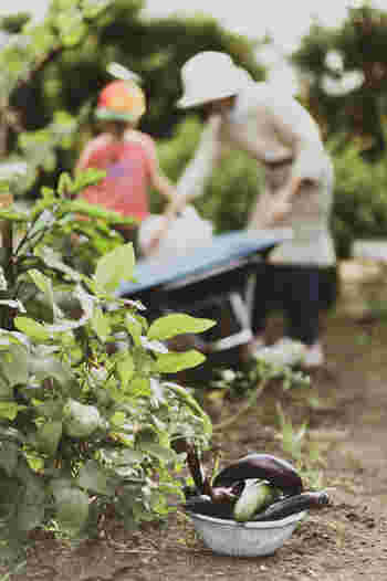 都心から離れた里山で週末だけ農業をするという方法もあります。生産者の方が管理している畑を週末だけ貸し出してくれるところや、レジャーやアクティビティの一貫として農業体験・収穫体験をさせてくれる畑もありますよ◎