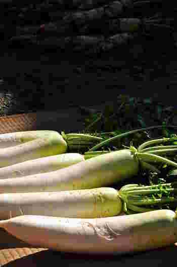 大根は、根の部分は淡色野菜、葉の部分は緑黄色野菜に分類されます。根に含まれるデンプン分解酵素のジアスターゼは消化を助け、胃もたれや胸やけなどに効果的。またすりおろすことで生成される辛味成分には発がん抑制作用や抗菌作用があるとされます。葉には多くのβ-カロテンのほかビタミンC、E、カリウム、カルシウムが含まれるので、葉付き大根が手に入ったら美味しく食べ切りたいですね。