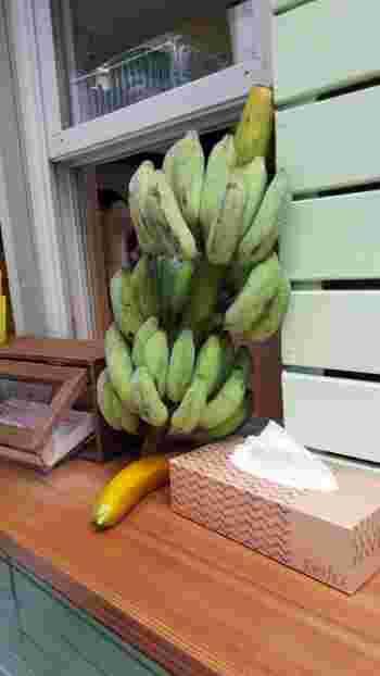沖縄県産の「琉球もちっ娘バナナ」という珍しい品種が入荷することもあるんですよ。原種に近い品種で、その名の通りもっちりした舌触りとフルーティーな香りが特徴。  バナナのバラ売りをしていることもあるので、ぜひ一度食べてみたいですね。