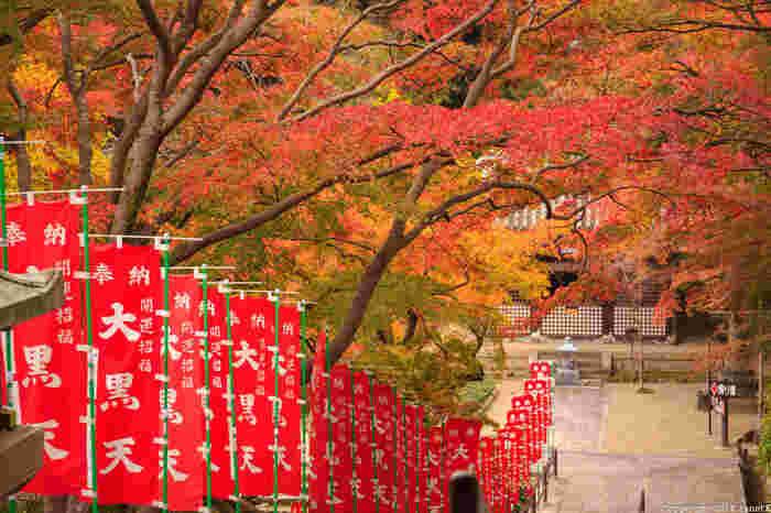 近鉄大阪線長谷寺駅から徒歩約15分のところにある長谷寺は、春には7,000株の牡丹が咲き誇る「花の御寺」としても知られています。他にも桜や紫陽花など、四季を通じてさまざまな花の景観を拝することができますが、秋の紅葉もまた絶景です。本堂脇の参道も鮮やかに色付いていますね。