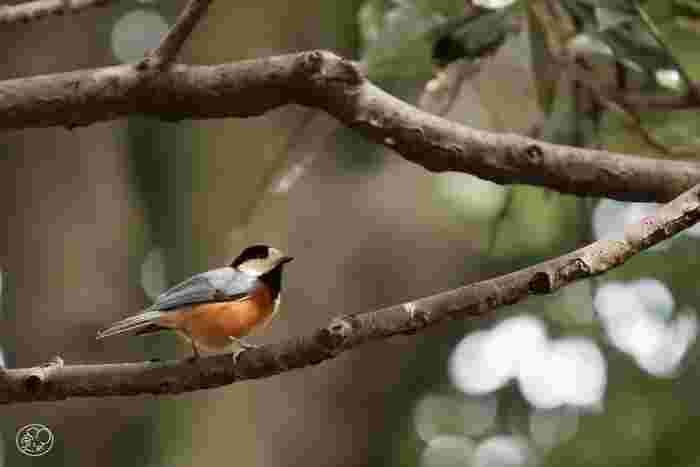 日本で最初に誕生したバードサンクチュアリには、野鳥が好きな木を植えて保護柵で囲われています。都会で目にするのが難しい、貴重な野鳥を見ることができるかも。