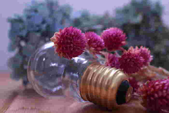 千日紅は開花期間が5月から11月なので、長い時間、フレッシュな旬の時期が続くお花です。切り花にしても色褪せしにくいので、ドライフラワーに向いています。