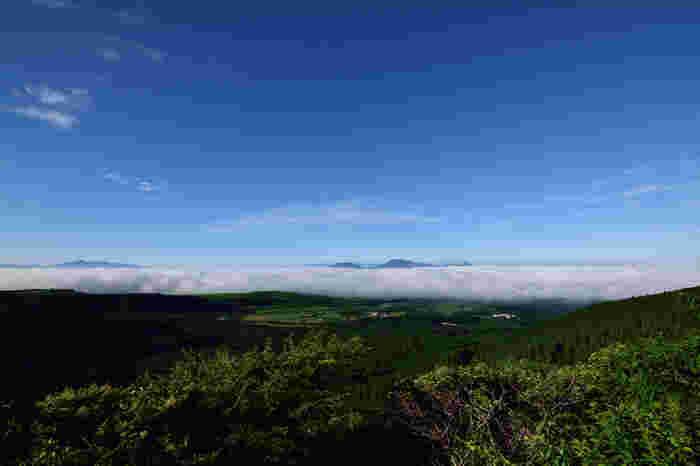 標高850メートルから900メートルに位置する瀬の本高原では、天気に恵まれると、眼下に広がる一面の雲海を見渡すことができます。