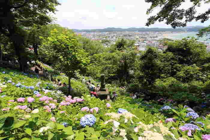 アジサイの季節は、境内に入るために順番待ちにもなってしまう長谷寺ですが、それ以外の季節もいつも花に囲まれていて、とても素敵なお寺なんですよ。