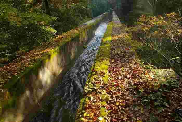 京都市の史跡に指定されている水楼閣の橋上には、現在も琵琶湖疏水が流れています。琵琶湖疏水は、琵琶湖(滋賀県大津)から京都市内へと惹かれた水路です。蹴上からは西へと進み、鴨川の東岸を南流して伏見へと致ります。【11月下旬の疎水分線】I