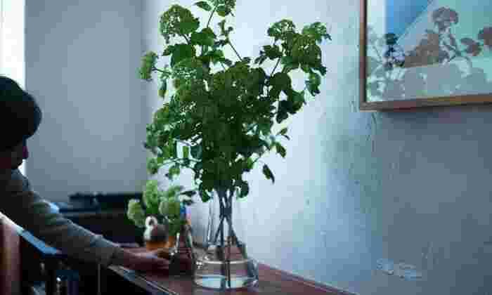 同じ植物でも、グリーンを基調にするとより一層潤いを感じられて、心も潤ってくるよう。お部屋全体が、清々しく浄化されますよ。