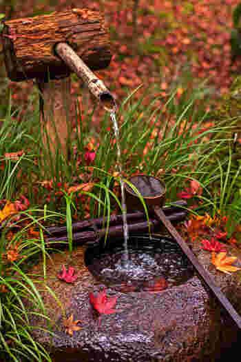 錦繍の秋に魅せられて…近畿地方での紅葉の名所を訪れよう【京都市嵯峨編】