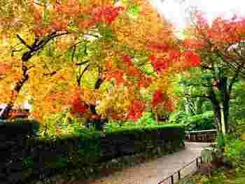 天龍寺は境内が広いので、庭園以外でも紅葉が見られます。散策しながら色鮮やかな木々を楽しみましょう。