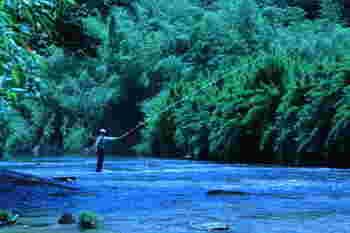 千葉県の中央を流れる養老川一帯にある「養老渓谷(ようろうけいこく)」は、春はツツジやフジ、秋は紅葉が美しく1年を通してハイキングを楽しめる人気スポットです。