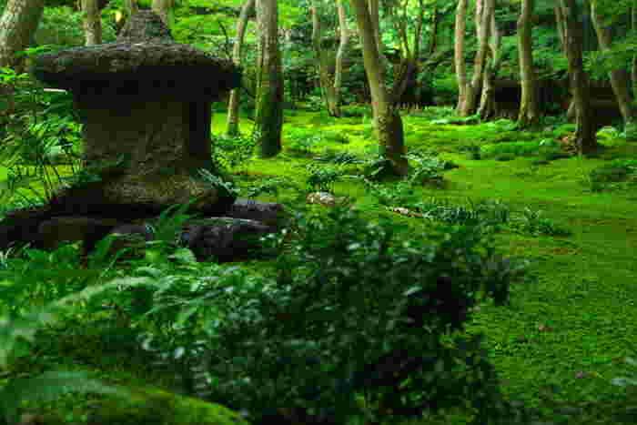 お寺の庭の見事な苔。悠久の時を感じさせる、わびさびの世界を堪能しましょう。