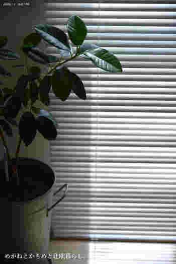 夏の直射日光は人間でも辛いですよね。植物も一緒で、直射日光に当てると葉焼けを起こしてしまいます。真夏は室内でもカーテンやブラインドなどで日光を遮ってあげることが大切です。