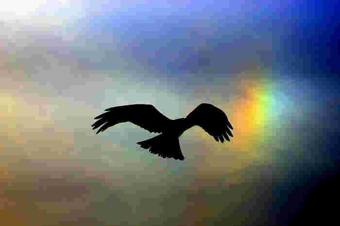 空を自由に飛べる鳥の目には、彩雲がどのように映るのでしょうか?