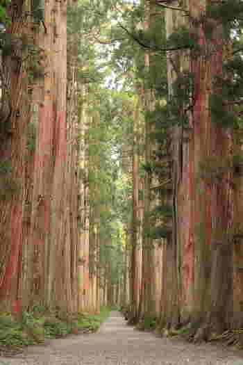 「戸隠奥社」参道。 今回ご紹介の「鏡池」「戸隠森林植物園」へのハイキングコースに通じる道もありますが、歩き慣れない方にはおすすめできません。
