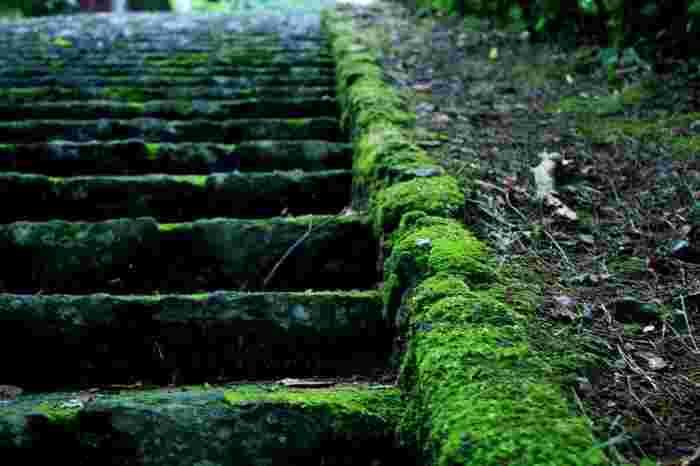 合計13,730段以上!階段の先には何があるの?苦労してでも見たい『絶景14選』