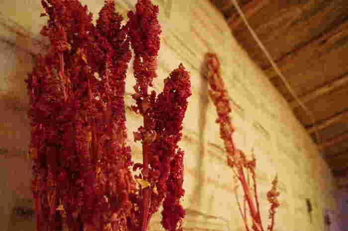 栄養価豊富な穀物「キヌア」を煎って加えてあります。チョコレートテイストの生地で、ベイクトキヌアのサクッとした食感が楽しめます。