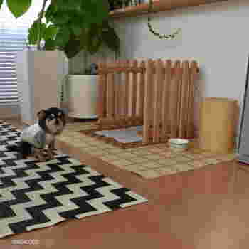 ■wacoさん with もんすけちゃん(チワワ) 木枠とフロアシートで作ったスペースは、適度に目隠しができるので、リビングに置いても気になりません。トイレの汚れが直接フローリングに付くと、床が傷む原因になりますから、シートを敷いておくと安心です。
