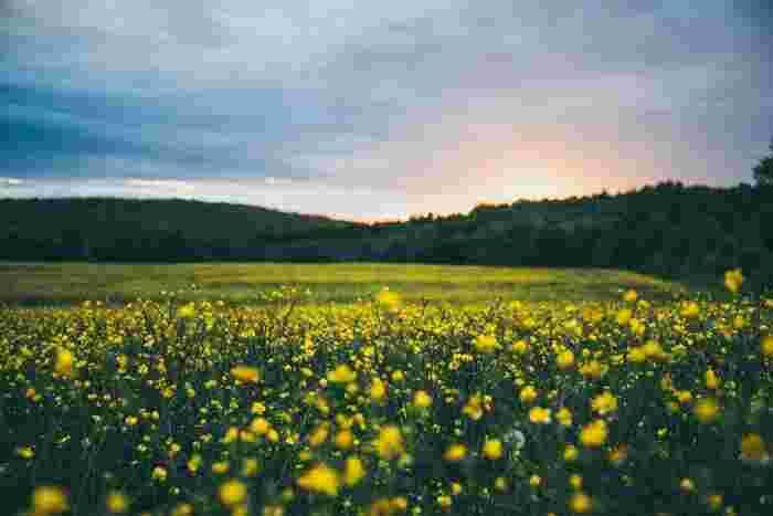 世界各地の素敵なお花畑をご紹介しました!美しい花々が作り出す風景、いつかは自分の目で見てみたいですよね♪自分へのご褒美に、ひそかに計画してみるのも良いかもしれません*
