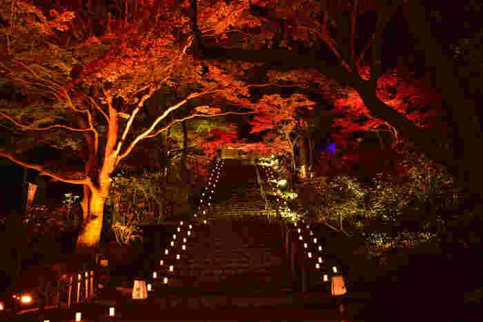 室生寺では、紅葉の時季になると夜間のライトアップが行われます。光を浴びて世闇に浮かび上がる紅葉した樹々は幻想的な美しさを醸し出しています。