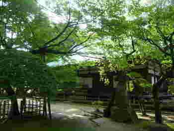 戦国時代の武将、北条早雲の菩提寺として大永元年(1521年)、早雲の息子氏綱によって創建されたお寺です。穏やかなときが流れ、心を落ち着けることができる場になっています。
