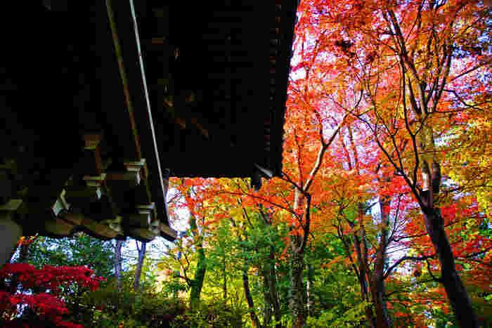 言わずと知れた人気登山スポット、高尾山。紅葉シーズンは特にたくさんの登山客で賑わいます。登山ルートから山頂まで、絶景ポイントが満載ですよ!紅葉の見頃は11月中旬頃からです。11月いっぱいはもみじまつりが開かれます。