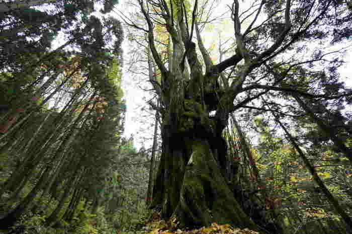標高1086メートルの二ツ森は、秋田県と青森県の県境にある山です。山頂へと続く道は、ハイキングコースにもなっており、登山客でも賑わっています。