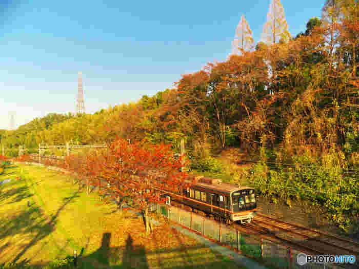ワイワイ楽しむ紅葉狩りもよいですが、今回は「大人の贅沢」になるような、紅葉狩りの上質な楽しみ方をご提案* たくさん外を歩いて疲れずにすみ、路線限定の駅弁など、食事いただきながら紅葉狩りができる、「もみじ列車」をご紹介します。  列車の車窓からは、紅葉の壮大な景色を、パノラマサイズで眺めることができます。列車によっては、紅葉のトンネルをくぐったりと、まさにオトナの贅沢。  今回は、とっておきの5路線を厳選しました。今年の秋は、車窓から優雅な紅葉狩りを楽しんでみましょう。