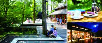 ハルニレの木に抱かれるショッピングテラス。吹き渡る風に四季が感じられ、せせらぎの音に癒される居心地のいい場所♪春から初夏は澄んだ風に心が洗われるようです。