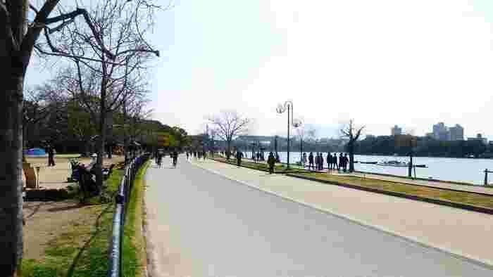 大濠公園は、周遊道の脇に自然が溢れているので、ゆったりと散歩を楽しむのにも絶好のスポット。ゴムチップ舗装された内周園路はとても歩きやすいので、ウォーキングコースとしてもぴったりです。