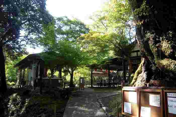 参道入口の石段を上り、先にあるのが「高雄茶屋」です。高雄山の豊かな木立の中で、食事や甘味が頂けます。