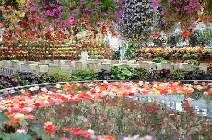 ベゴニアガーデンでは、煌びやかなシャンデリアのように、色鮮やかな花々が天井から吊るされています。静かな池に浮かぶオブジェのような花はベゴニアガーデン内の美しさを引き立て、館内はまるで楽園のようです。