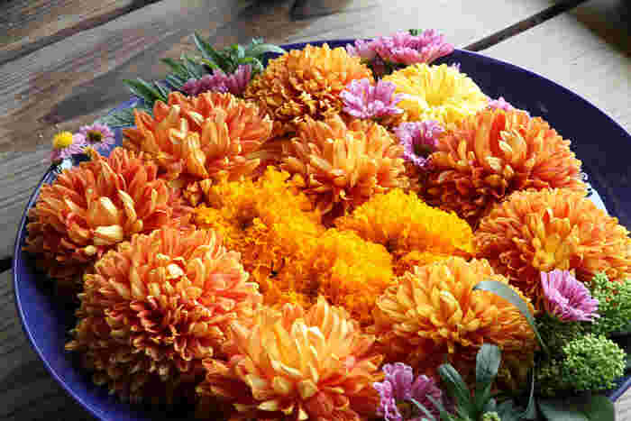 中国原産。キク科キク属の植物。日本の秋を象徴する花としておなじみですね。花言葉は、鎌倉時代初頭、菊の花の意匠を好んだ後鳥羽上皇が、「菊紋」を皇室の家紋としたことに由来するとか。