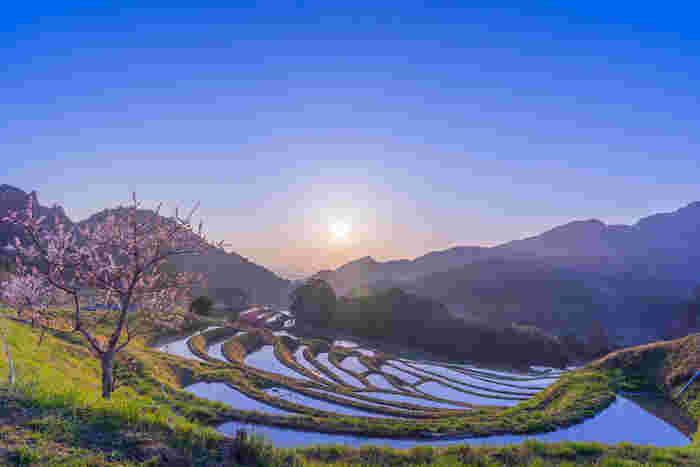 大山棚田は、約4ヘクタールの面積に375枚の水田が敷かれた棚田です。約60メートルの高低差がある傾斜地に造られた棚田の美しさから、大山棚田は、日本の棚田百選に認定されているほか、千葉県の名勝に指定されています。