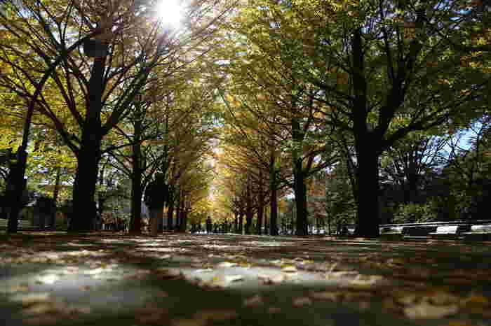 光が丘のシンボルとも言える光が丘公園は、芝生広場や噴水のほかに野球場やテニスコート、デイキャンプ場やバーベキュー広場などもあります。フリーマーケットやイベントも定期的に開催されており、さまざまな楽しみ方ができます。