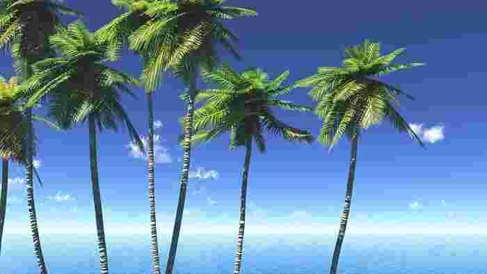 青空がきれいに出ている日は撮影日和です。グリーンやホワイトなど、ほかの色味との対比が美しく表れている写真は使われやすいんですよ!