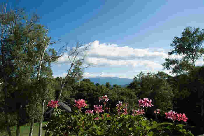 東京から車で約2時間半のところにある「八ヶ岳」は、山梨県と長野県にまたがる山々。首都圏から近い避暑地としても人気のエリアです。本格的な登山はハードルが高いという方も、気軽に森林浴が楽しめます。